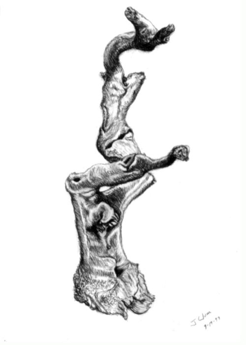 Driftwood Greeting Card featuring the drawing Driftwood by John Clum