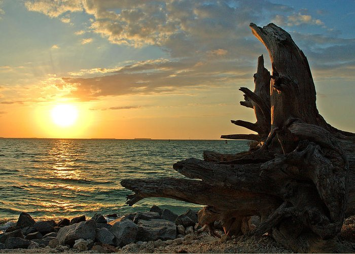 Sunset Greeting Card featuring the photograph Driftwood Sunset by Susanne Van Hulst
