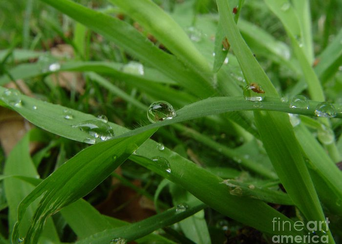 Water Droplet Greeting Card featuring the photograph Droplets 01 by Peter Piatt