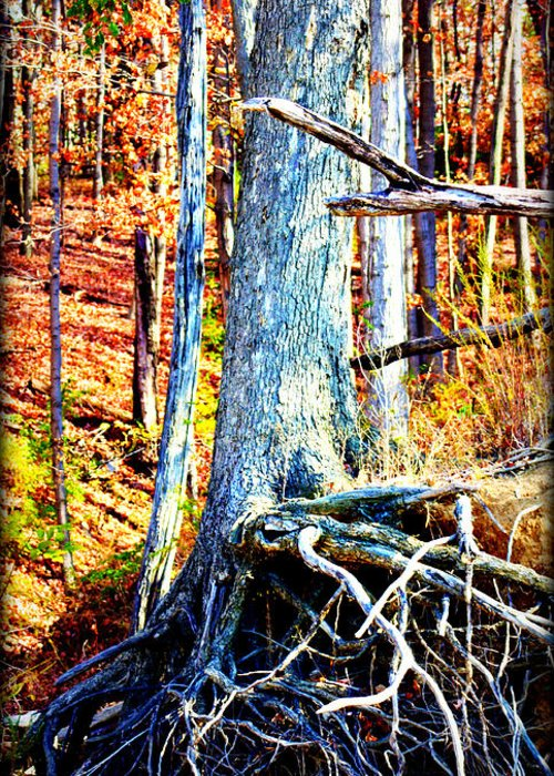 Tree Greeting Card featuring the photograph Dry Docked by Susie Weaver