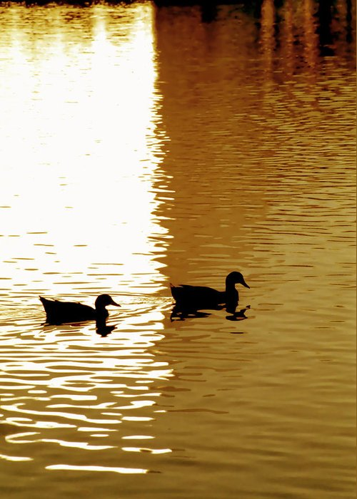 Silhouettes Greeting Card featuring the photograph Ducks On Pond 2 by Steve Ohlsen