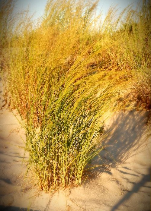 Sand Dune Greeting Card featuring the photograph Dune Grass II - Jersey Shore by Angie Tirado