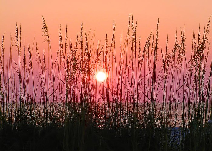 Florida Greeting Card featuring the photograph Dune Grass Sunset by Bill Cannon