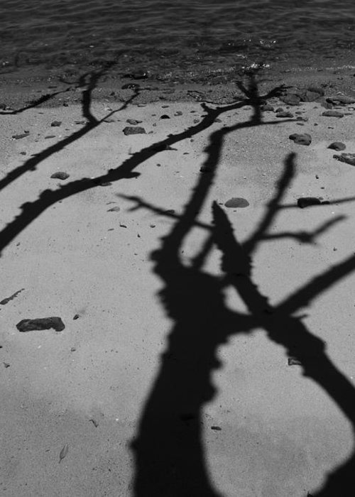 Shadows Greeting Card featuring the photograph Dunk Island Australia 174 by Per Lidvall