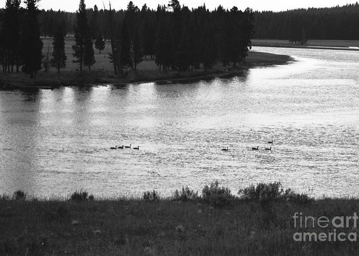 Wildlife Greeting Card featuring the photograph Dusk At The Yellowstone River by Susan Chandler