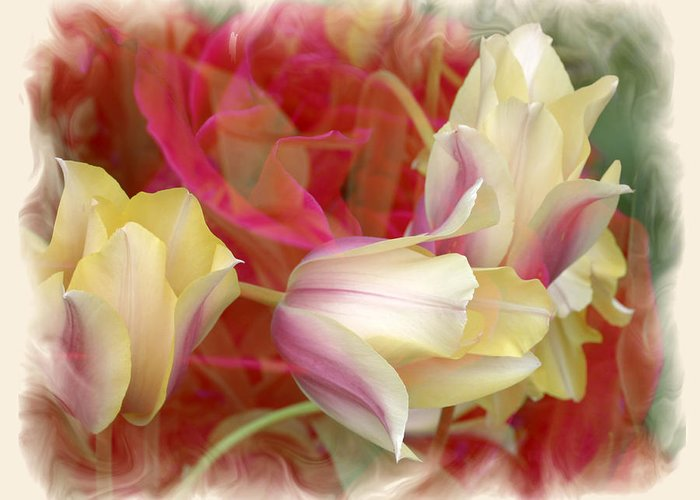 Floral Greeting Card featuring the photograph Dutch Treat by Chuck Brittenham