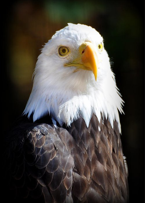 Eagle Greeting Card featuring the photograph Eagle 14 by Marty Koch