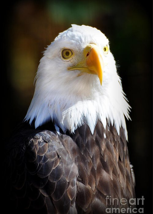 Eagle Greeting Card featuring the photograph Eagle 23 by Marty Koch