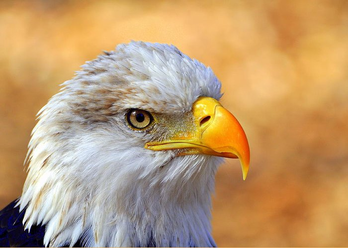 Eagle Greeting Card featuring the photograph Eagle 7 by Marty Koch