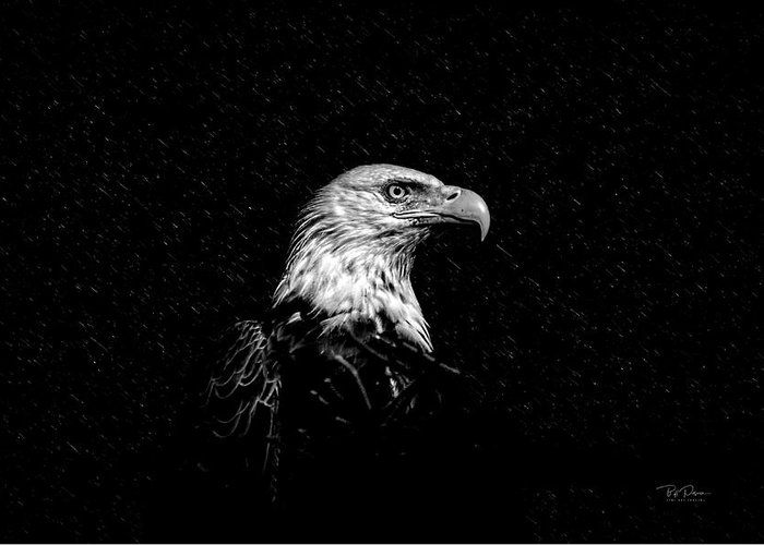 Eagle Greeting Card featuring the photograph Eagle In Black And White by Bill Posner