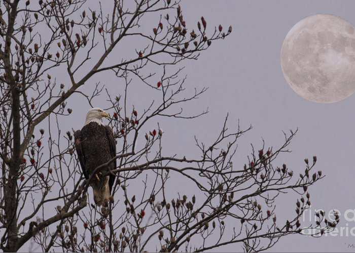 Bald Eagle Greeting Card featuring the photograph Eagle Lookout by Mark Stephens