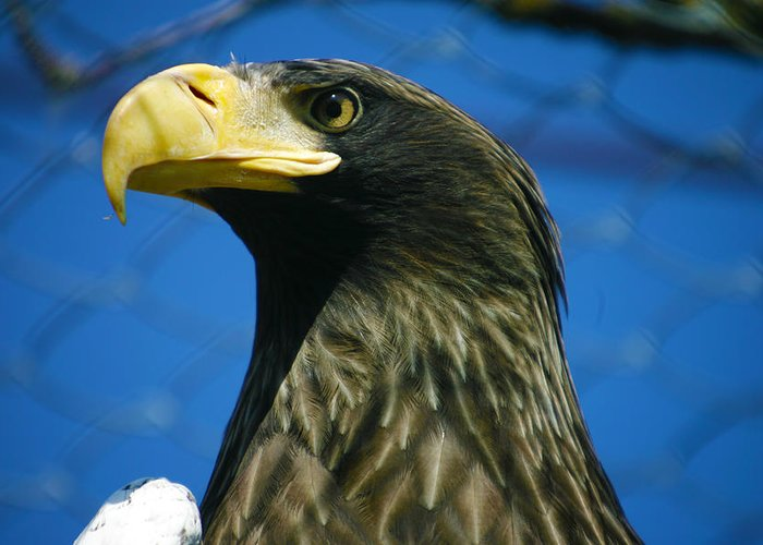 Eagle Greeting Card featuring the photograph Eagle by Mopics Eu