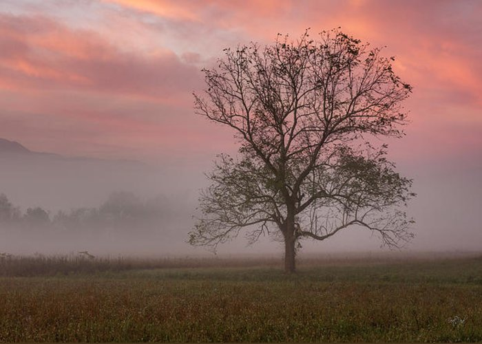 Cades Greeting Card featuring the photograph Early Morning Promises by Everet Regal