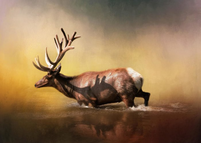 Elks Greeting Cards