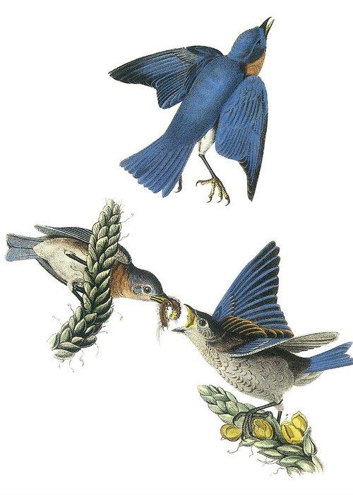 Audubon Greeting Cards