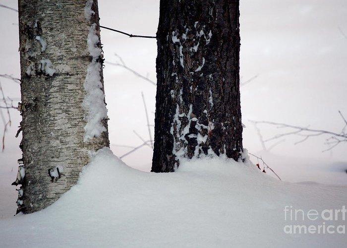 Tree Greeting Card featuring the photograph Ebony And Ivory by Faith Harron Boudreau