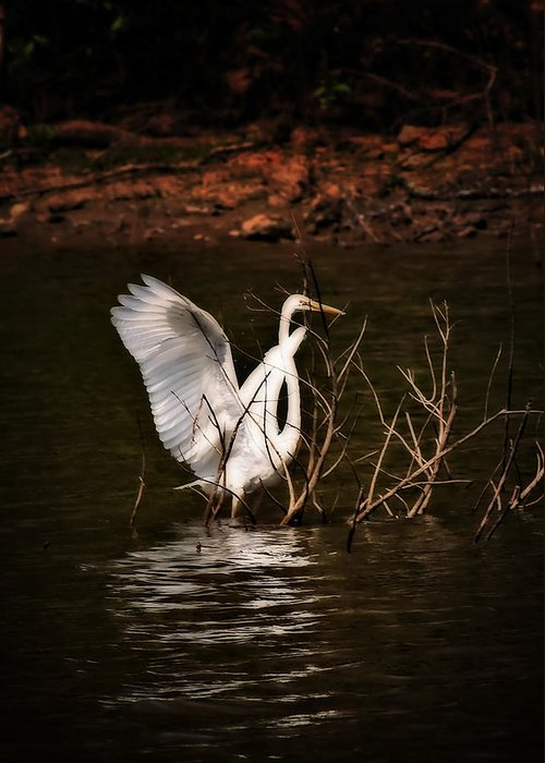 Egrets Greeting Card featuring the photograph Egret Ix by Gary Adkins