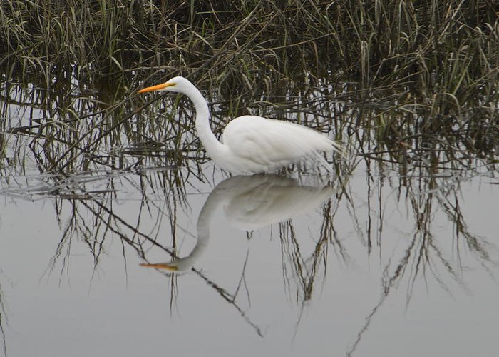 Egret Greeting Card featuring the photograph Egret Reflection by Judith Morris