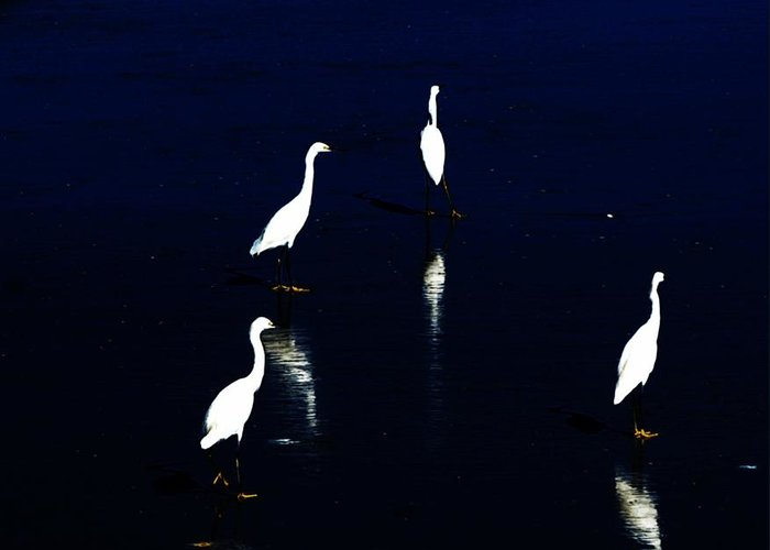 Sea Birds Greeting Card featuring the digital art Egret Reflections by David Lane