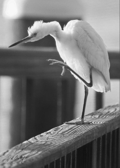 Birds Greeting Card featuring the photograph Egret Tai Chi by Phill Doherty