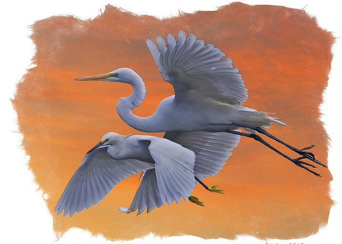 Great Egret Greeting Card featuring the digital art Egrets Great And Snowy by Larry Linton