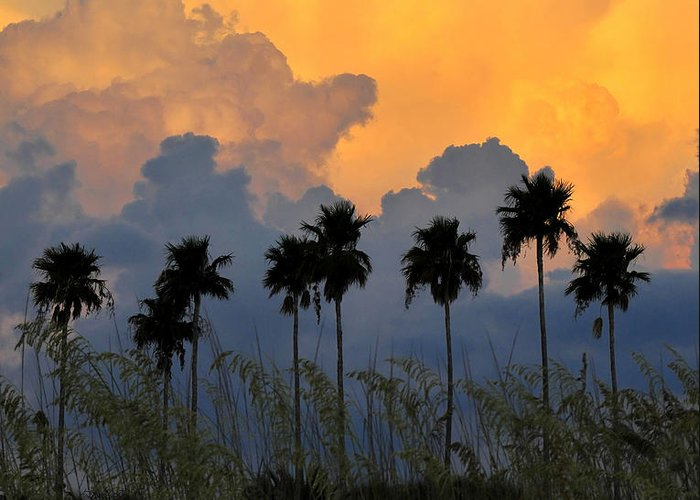 Fine Art Photography Greeting Card featuring the photograph Eight Palms by David Lee Thompson