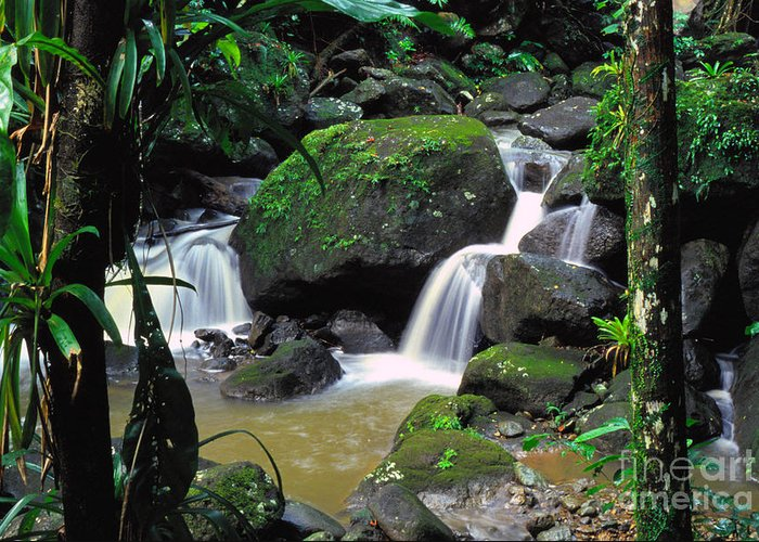 Puerto Rico Greeting Card featuring the photograph El Yunque National Forest Waterfall by Thomas R Fletcher