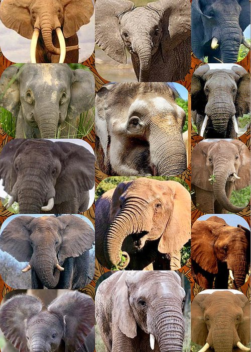 Greeting Card featuring the photograph Elephant Faces by Miriam Marrero