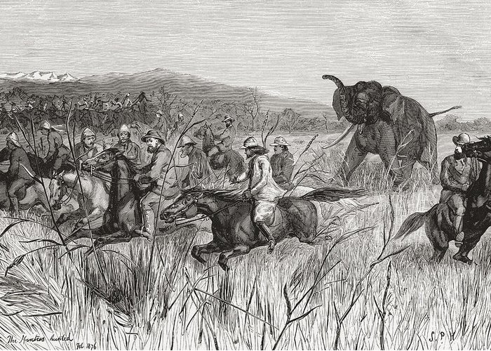 Welsh Greeting Card featuring the drawing Elephant Hunters In The 19th Century by Vintage Design Pics