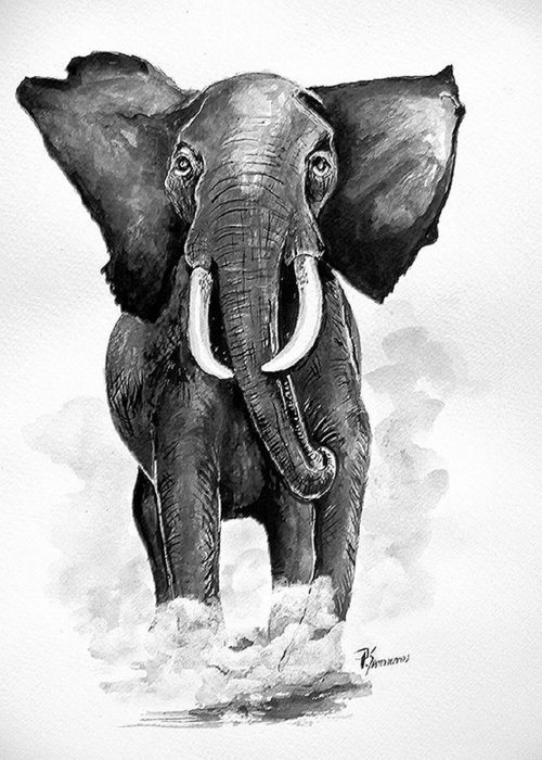 Elephant Greeting Card featuring the painting Elephant by Paul Sandilands