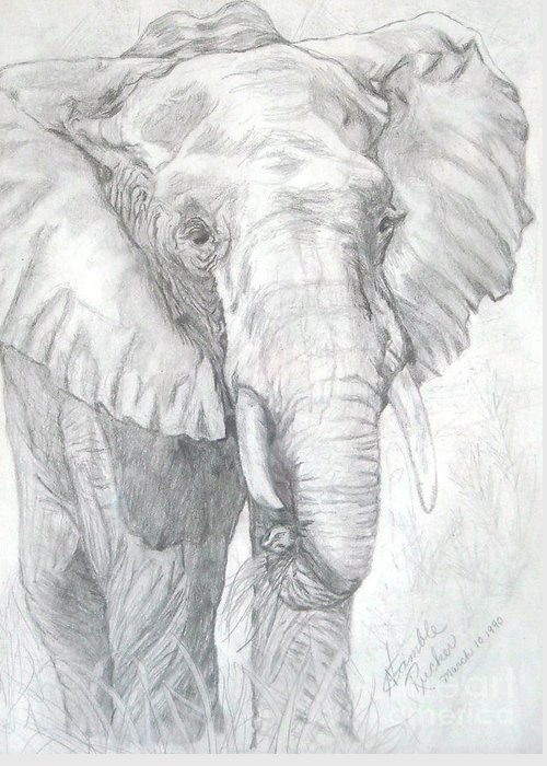 Pencil Drawing Greeting Card featuring the drawing Elephant Walk by Nancy Rucker