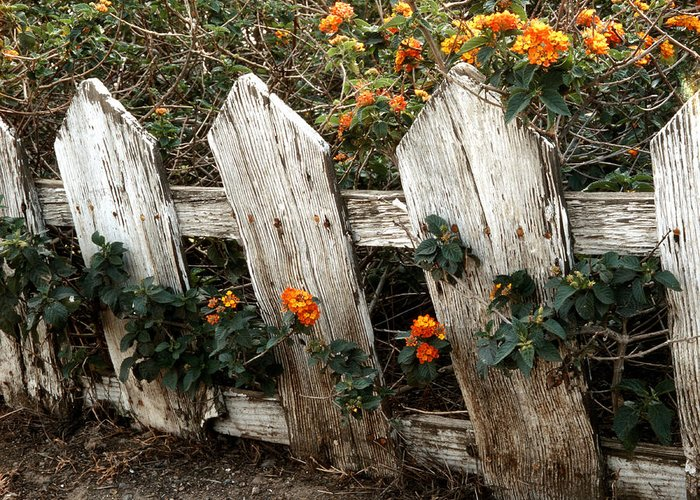 Flowers Greeting Card featuring the photograph Elsinore Fence by Lawrence Costales
