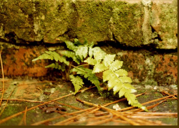 Ferns Greeting Card featuring the photograph Emerald Dream by Jan Amiss Photography
