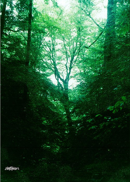 Emerald Greeting Card featuring the photograph Emerald Glade by Seth Weaver