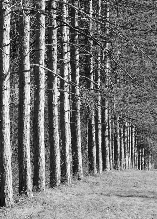Forest Greeting Card featuring the photograph Enchanted Forest by Luke Moore