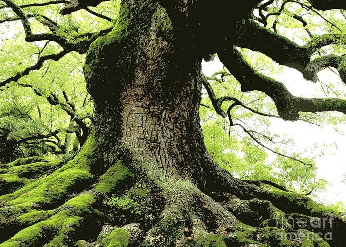 Tree Greeting Card featuring the photograph Endurance In Japan - Digital Art by Carol Groenen