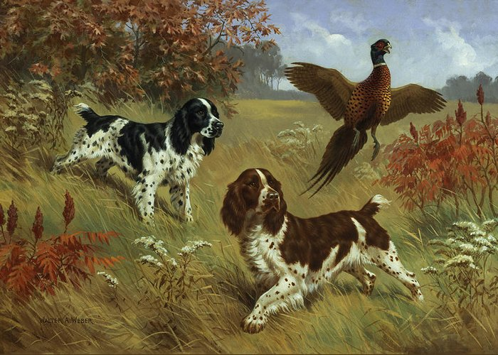 Illustration Greeting Card featuring the photograph Energetic English Springer Spaniels by Walter A. Weber