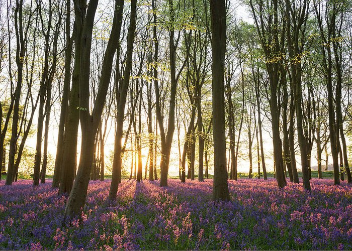 Hyacinthoides Non-scripta Greeting Card featuring the photograph English Bluebell Wood by Chris Deeney