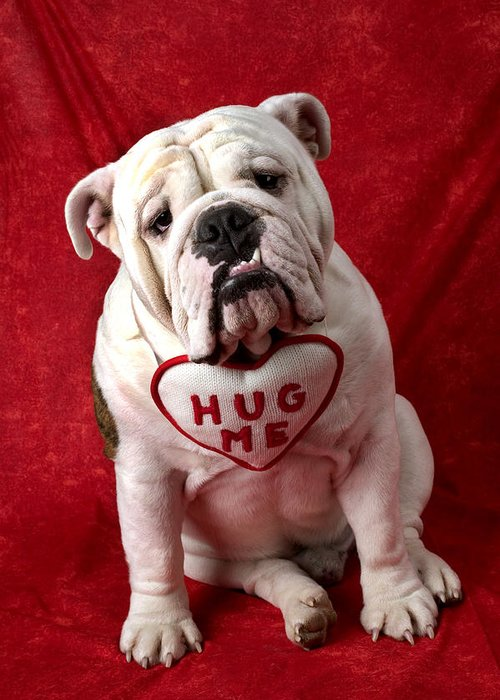 Dog Greeting Card featuring the photograph English Bulldog by Garry Gay