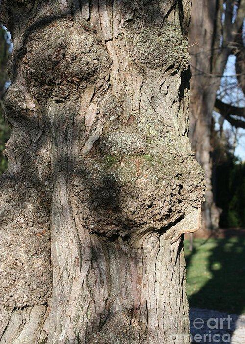 Trees Greeting Card featuring the photograph Ent Face by James E Weaver