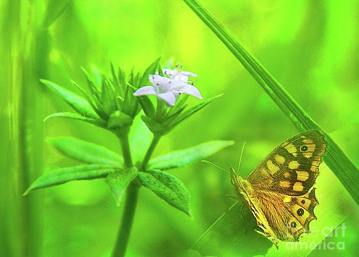 Butterfly Greeting Card featuring the photograph Entre Flors by Amparo Gallego Mateo