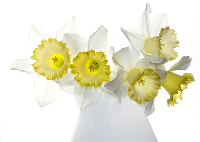 Daffodils Greeting Card featuring the photograph Ephifany by Rebecca Cozart