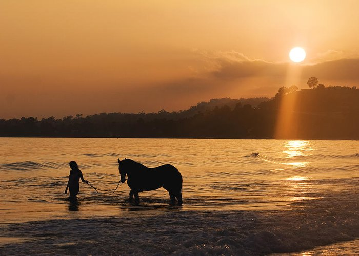 Beach Greeting Card featuring the photograph Equine Beach Time by Nick Sokoloff