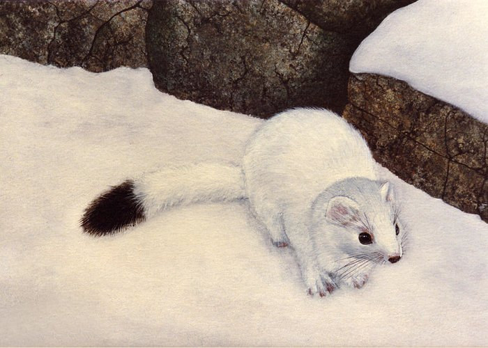 Wildlife Greeting Card featuring the painting Ermine In Winter by Frank Wilson