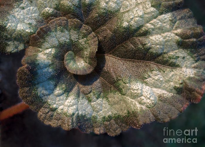 Escargot Greeting Card featuring the photograph Escargot Begonia by Anna Lisa Yoder