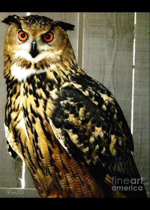 Eurasian Greeting Card featuring the photograph Eurasian Eagle-owl With Oil Painting Effect by Rose Santuci-Sofranko