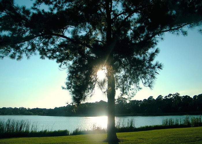 Evening At Lake Myers. Greeting Card featuring the photograph Evening by Nereida Slesarchik Cedeno Wilcoxon