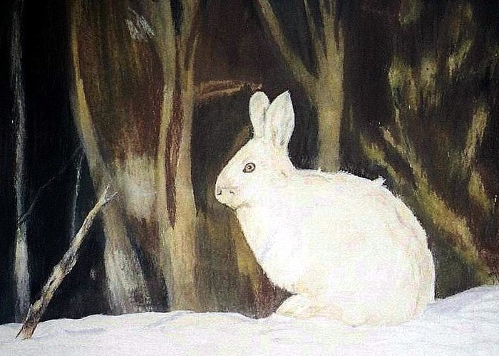 Snowshoe Hare Greeting Card featuring the painting Evening Snow by Debra Sandstrom