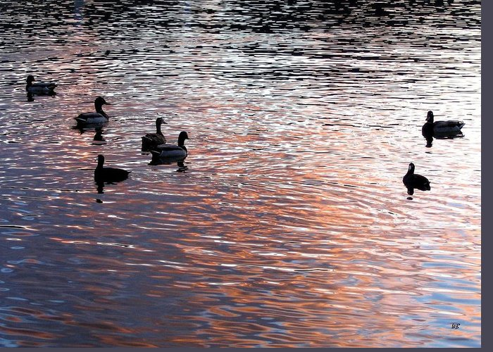 Ducks Greeting Card featuring the photograph Evening Swim by Will Borden