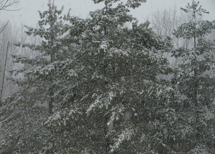 Snow Greeting Card featuring the photograph Evergreen Snowfall by Mike Stanfield
